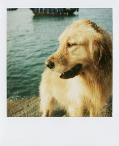 Last Polaroids Dog Waiting for SanPan