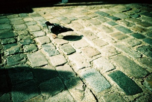 Brick Pigeon