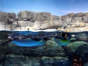 Sea Paradise: Close to penguins
