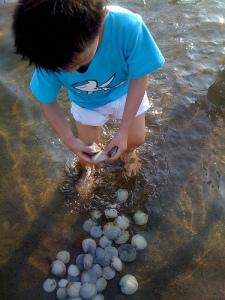 Sea Paradise: touching sea life