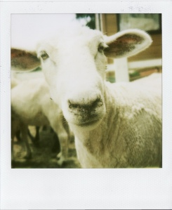 Last Polaroids_0048