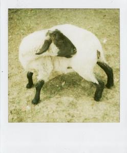 Last Polaroids_0047