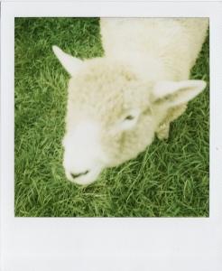 Last Polaroids_0049