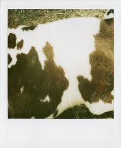 Last Polaroids_0051