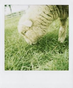 Last Polaroids_0050