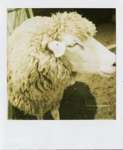 Last Polaroids_0042