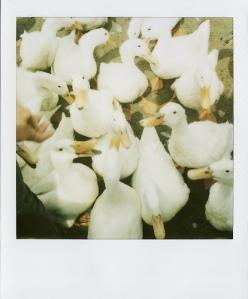 Last Polaroids_0045